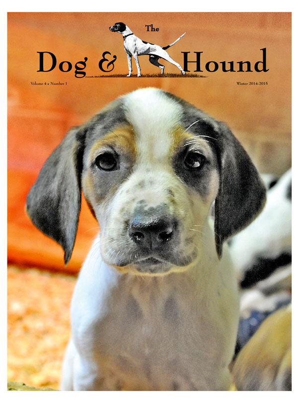 Hound Puppy Cover